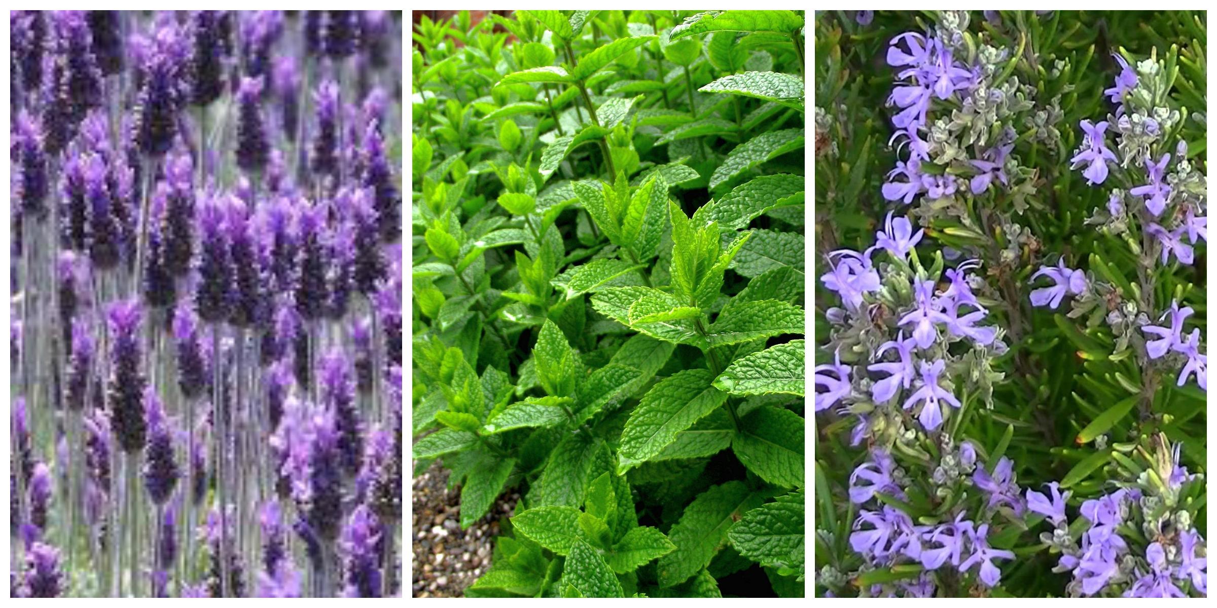 Las mejores plantas para decorar tu piscina for Plantas para poner cerca de la piscina